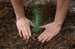 tree planting forestry consultant